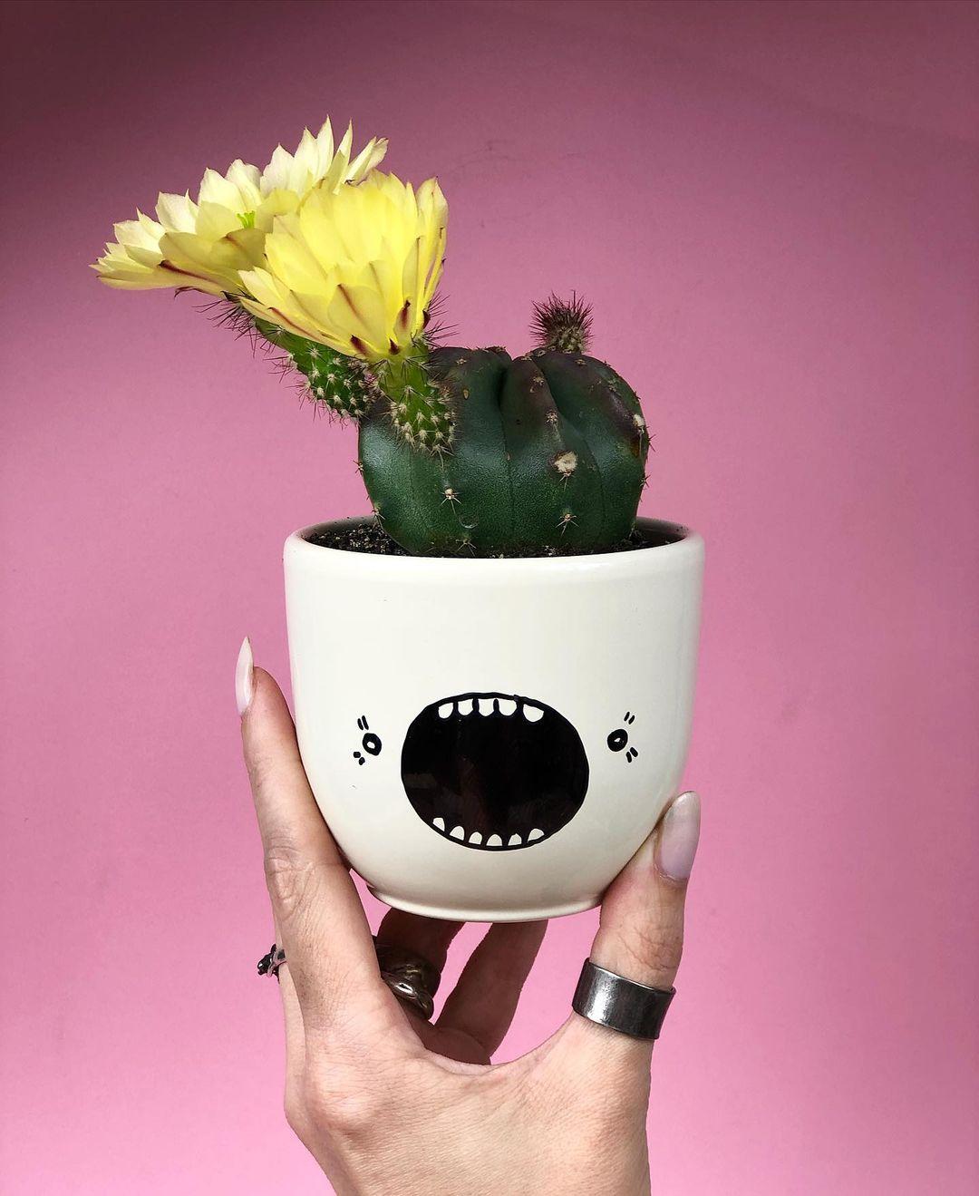 полив цветущего кактуса