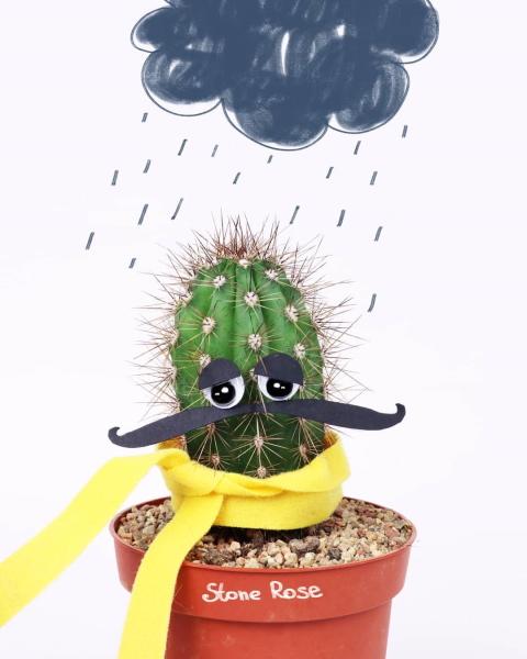 чем поливать кактус