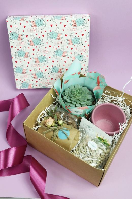 Подарочный набор Creative Succulens BOX №13