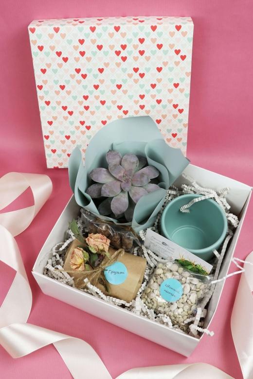 Подарочный набор Creative Succulens BOX №14