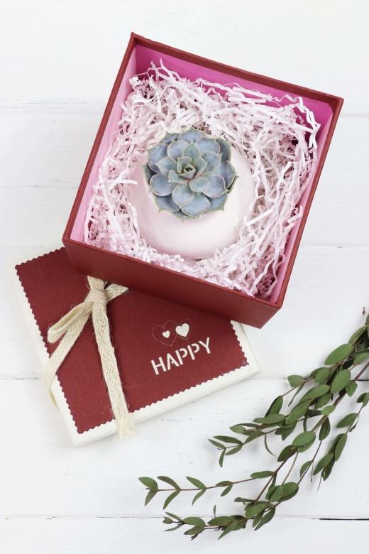 Подарочный набор Creative Succulens BOX №21