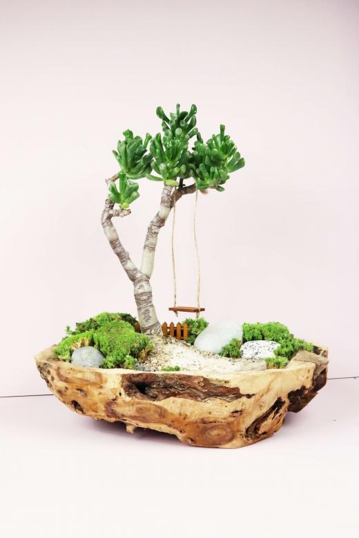 Мини-сад в дереве
