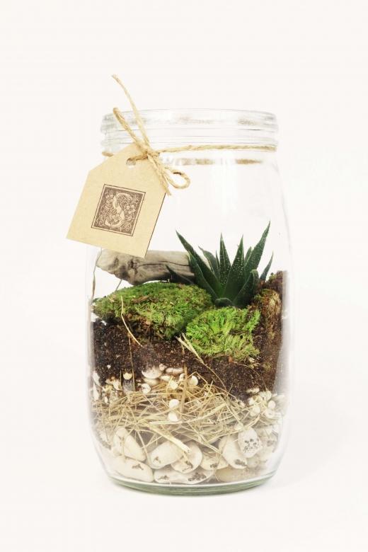 Мини-сад в стеклянной банке С008