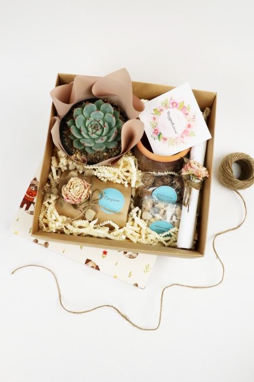 Подарочный набор Creative Succulens BOX №23