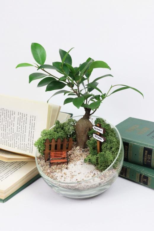 Мини-сад с бонсаем гинсенг ( Ficus Gingsent) А1