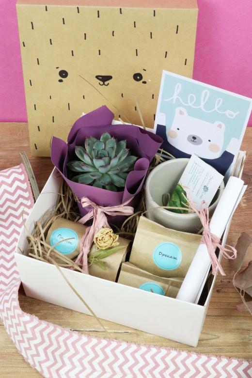 Подарочный набор Creative Succulens BOX №40