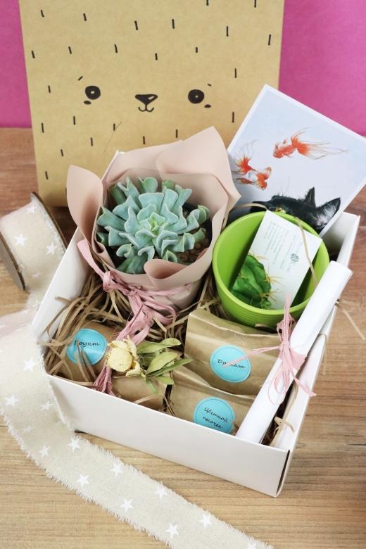 Подарочный набор Creative Succulens BOX №91