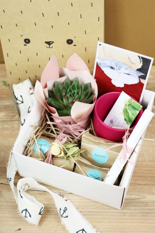Подарочный набор Creative Succulens BOX №102