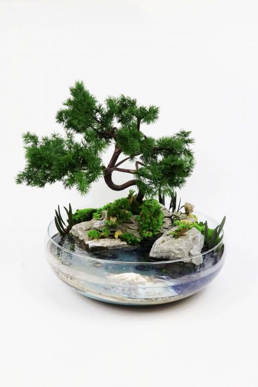 Моссариум с стабилизированными растениями и травами