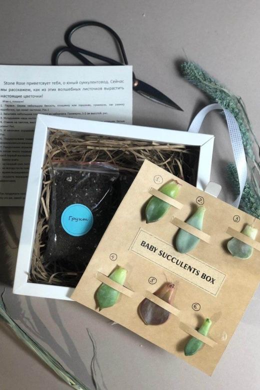 Baby succulents BOX ( Набор для выращивания суккулентов из листочков)