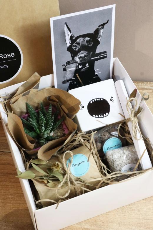 Подарочный набор Creative Succulens BOX №129