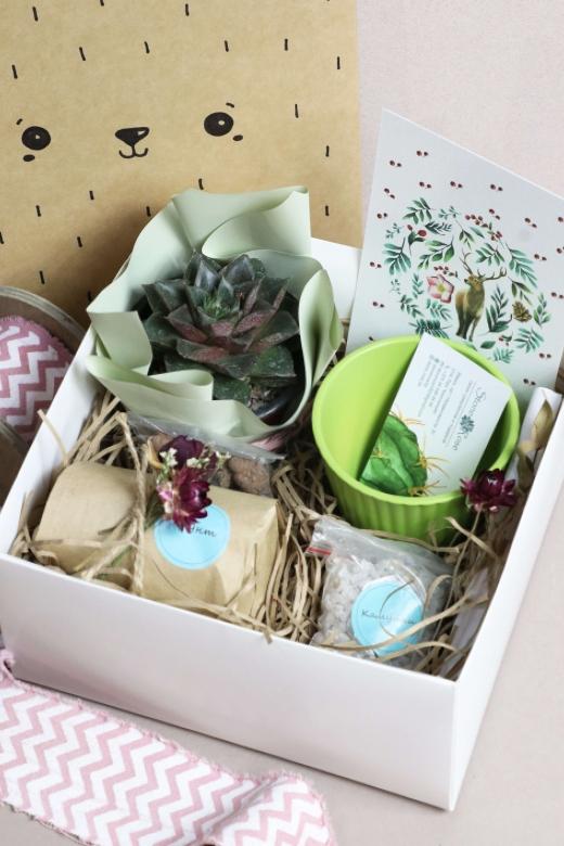 Подарочный набор Creative Succulens BOX №132