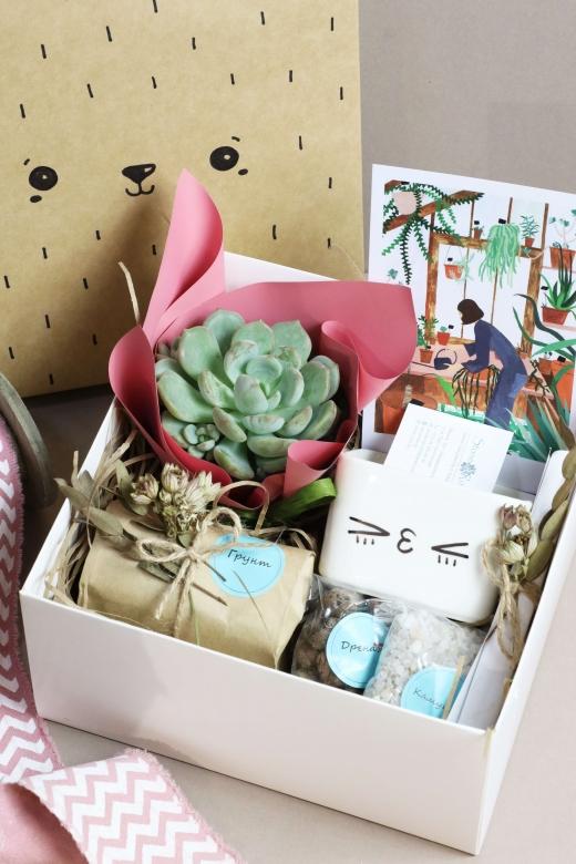 Подарочный набор Creative Succulens BOX №6