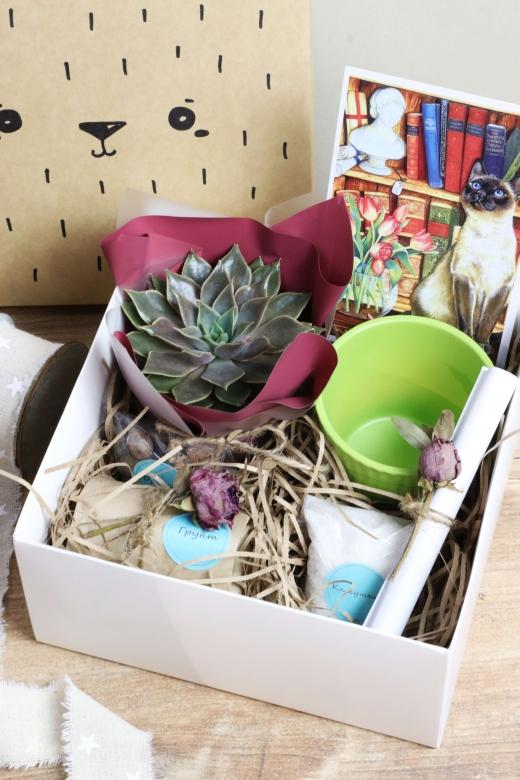 Подарочный набор Creative Succulens BOX №139
