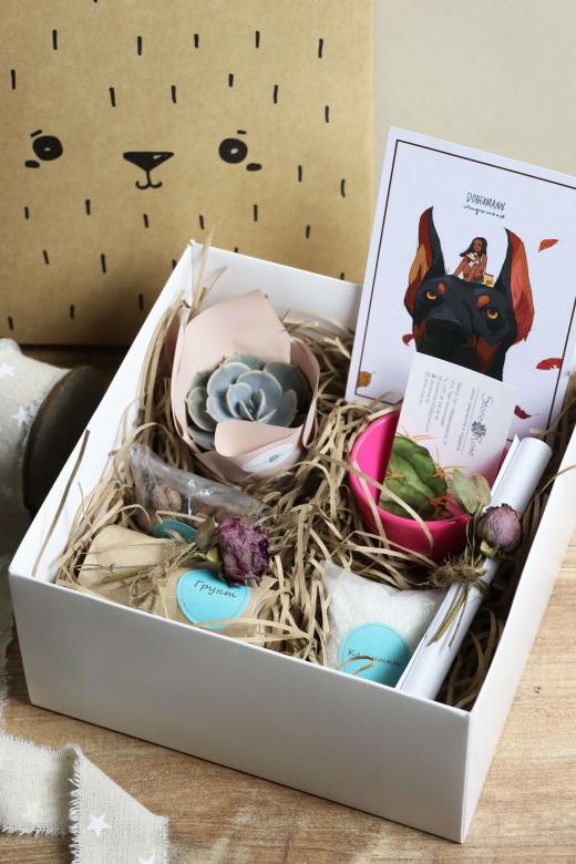 Подарочный набор Creative Succulens BOX №143