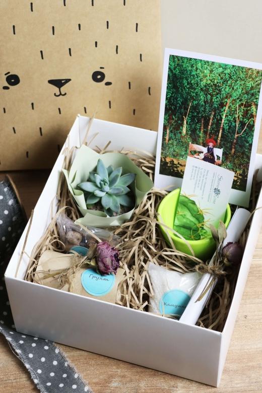 Подарочный набор Creative Succulens BOX №144
