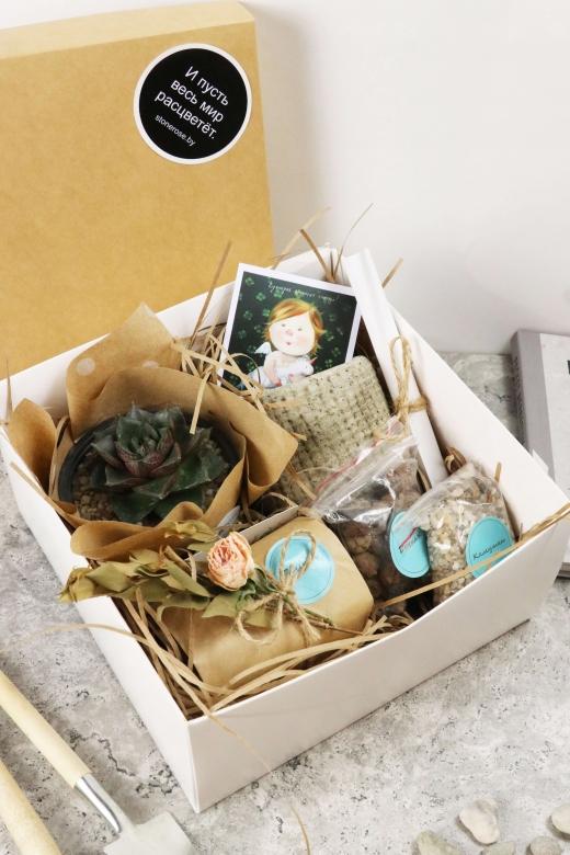 Подарочный набор Creative Succulens BOX №122