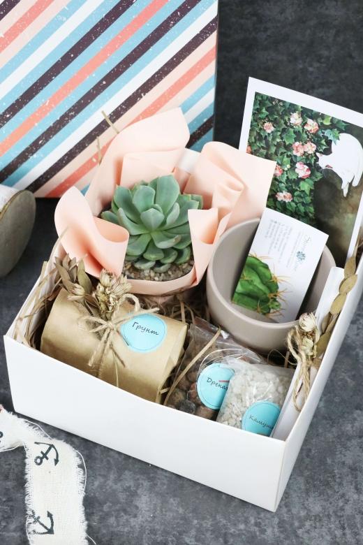 Подарочный набор Creative Succulens BOX №161