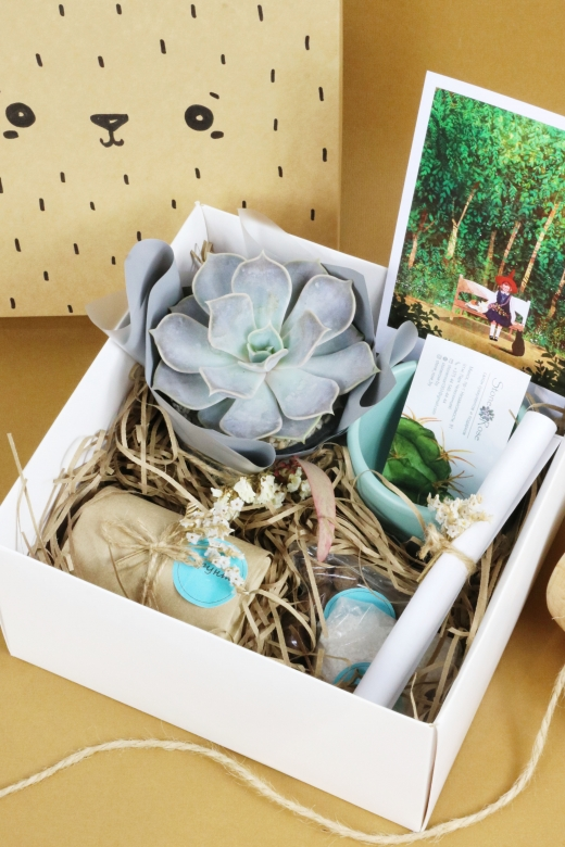 Подарочный набор Creative Succulens BOX №173