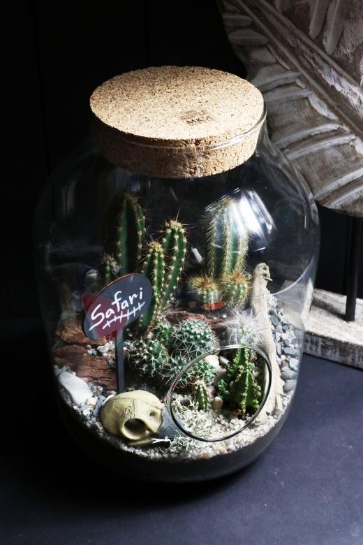 Мини-сад в стеклянной колбе С030