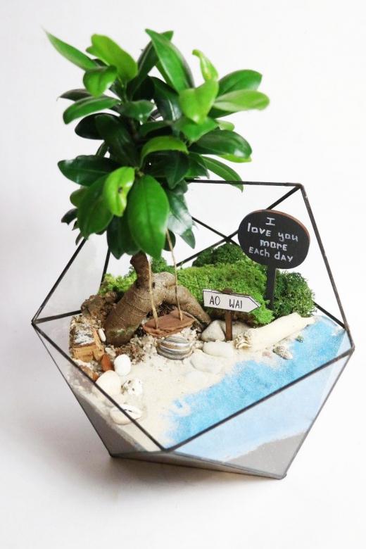 Мини-сад с бонсаем гинсенг ( Ficus Gingseng) А21