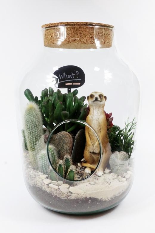 Мини-сад в стеклянной колбе С0056