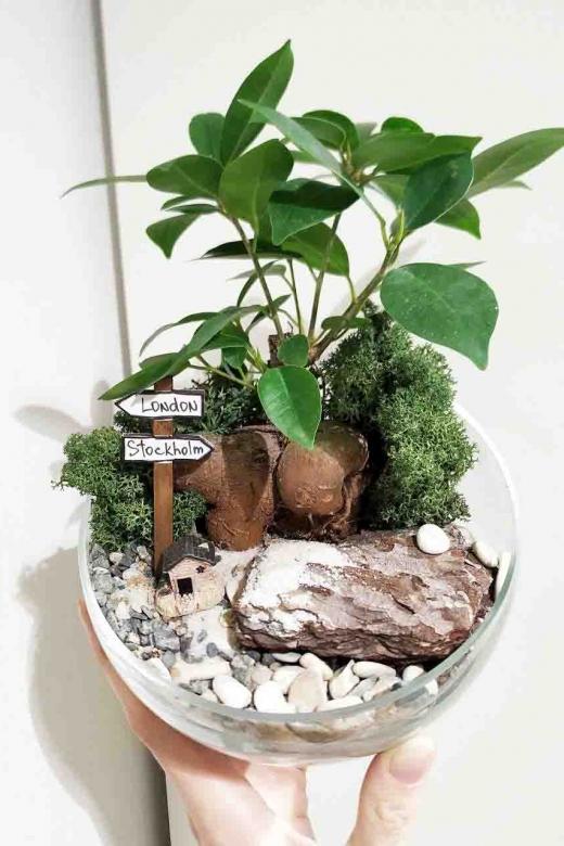Мини-сад с бонсаем гинсенг ( Ficus Gingseng) А3