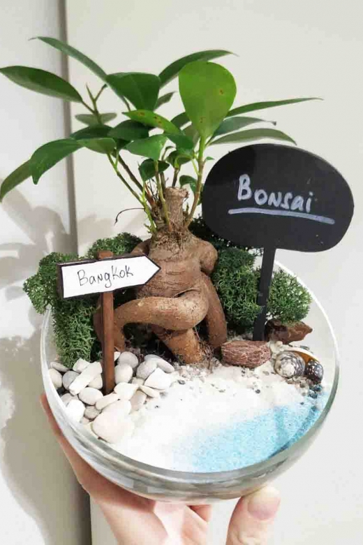 Мини-сад с бонсаем гинсенг ( Ficus Gingseng) А2