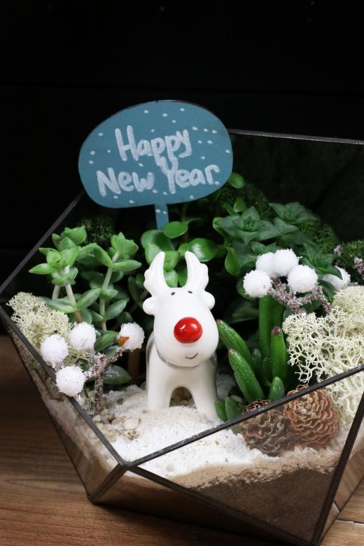 Новогодний Мини-сад B0045