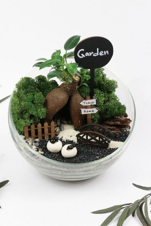 Мини-сад с бонсаем гинсенг ( Ficus Gingseng) d18