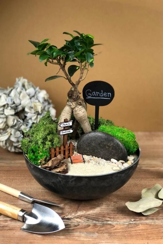 Мини-сад с бонсаем гинсенг ( Ficus Gingseng) С022