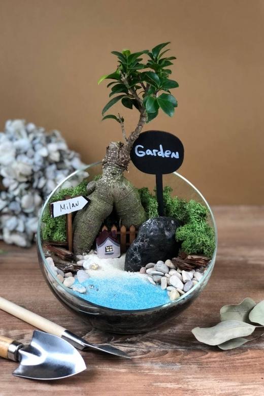 Мини-сад с бонсаем гинсенг ( Ficus Gingsent) А2
