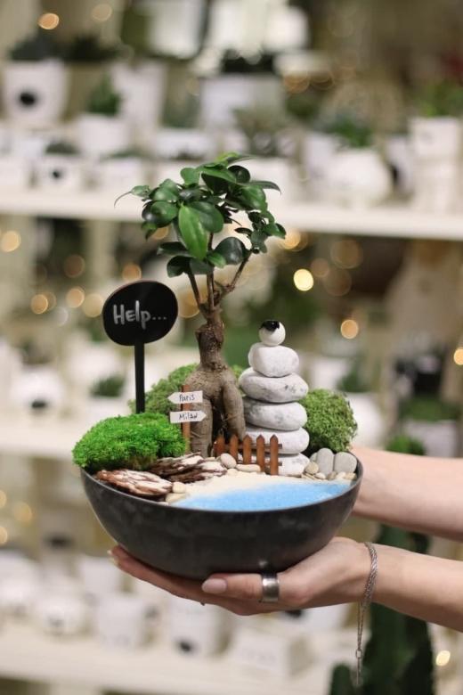 Мини-сад с бонсаем гинсенг ( Ficus Gingseng) А4