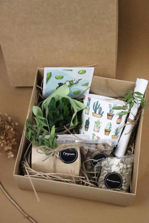 Подарочный набор Creative Succulens BOX №34
