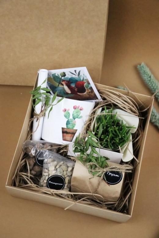 Подарочный набор Creative Succulens BOX №140
