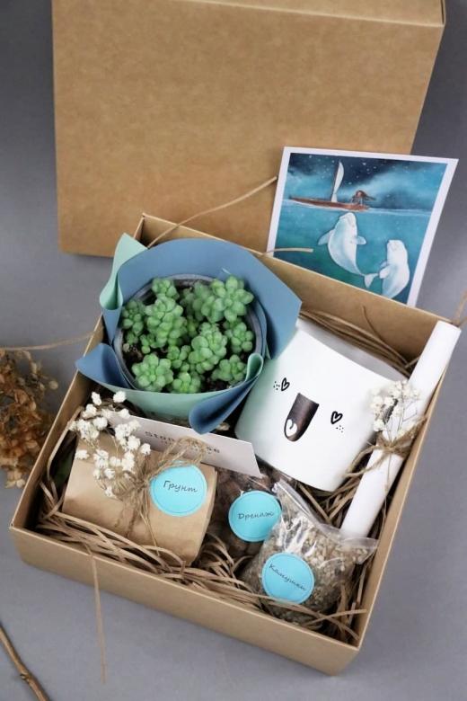 Подарочный набор Creative Succulens BOX №162