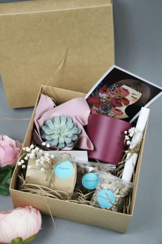 Подарочный набор Creative Succulens BOX №174