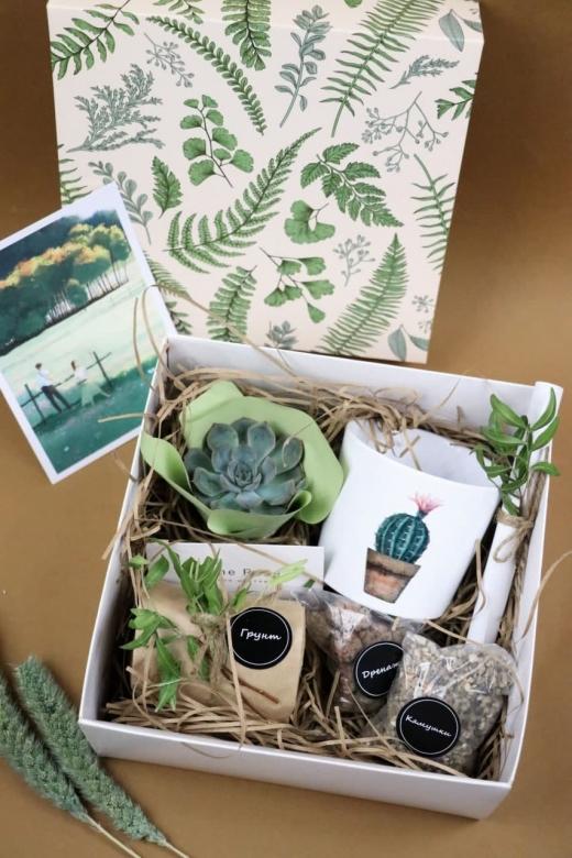Подарочный набор Creative Succulens BOX №127