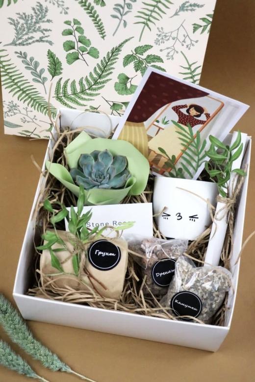 Подарочный набор Creative Succulens BOX №7
