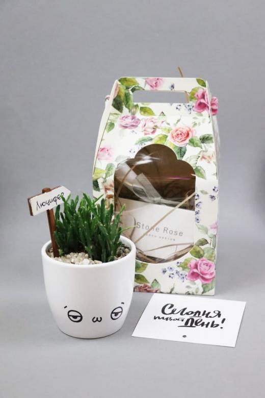 Подарочный набор Creative Succulens BOX №3