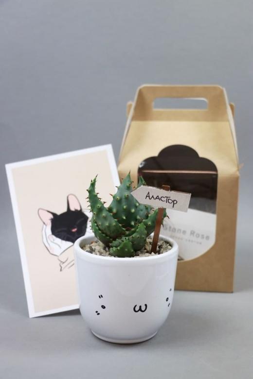 Подарочный набор Creative Succulens BOX №5