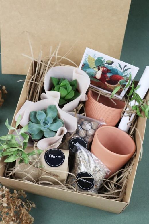 Подарочный набор Creative Succulens BOX №171