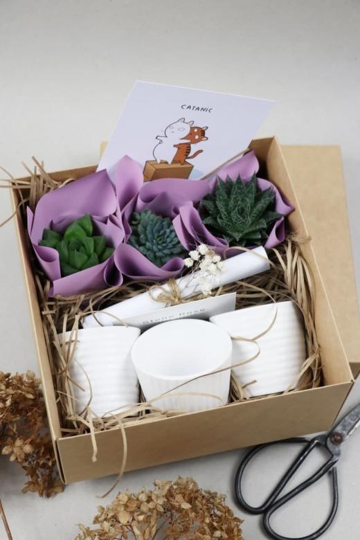 Подарочный набор Creative Succulens BOX №90