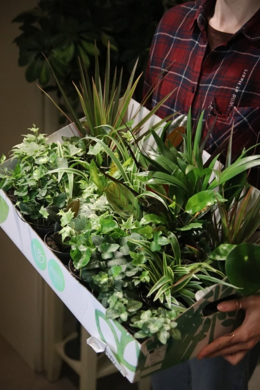 Plant Mix 2